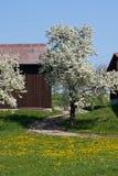 άνθιση appletree στη νότια Γερμανία Στοκ φωτογραφίες με δικαίωμα ελεύθερης χρήσης