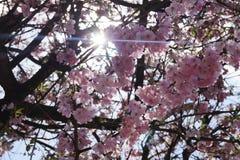 Άνθιση Appletrees και Cherrytrees Στοκ εικόνα με δικαίωμα ελεύθερης χρήσης