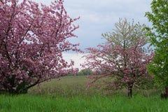 Άνθιση Appletrees και Cherrytrees Στοκ φωτογραφία με δικαίωμα ελεύθερης χρήσης