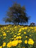 Άνθιση wildflowers άνοιξη Στοκ Εικόνες