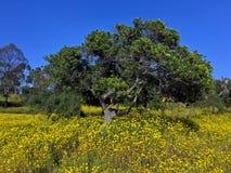 Άνθιση wildflowers άνοιξη Στοκ φωτογραφίες με δικαίωμα ελεύθερης χρήσης
