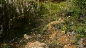 Άνθισμα των διάφορων χορταριών το καλοκαίρι φιλμ μικρού μήκους