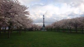 Άνθισμα Sakura Στοκ Φωτογραφίες
