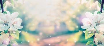 Άνθος άνοιξη πέρα από το θολωμένο υπόβαθρο φύσης με την ηλιοφάνεια, έμβλημα Στοκ Εικόνες