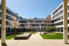 Άνθος άνοιξη Sakura στο προαύλιο του σύγχρονου κτιρίου γραφείων Στοκ εικόνα με δικαίωμα ελεύθερης χρήσης