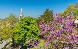 Άνθος δέντρων άνοιξη στο Angouleme, Γαλλία Στοκ φωτογραφία με δικαίωμα ελεύθερης χρήσης