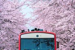 Άνθος ή Sakura κερασιών και trian την άνοιξη σε Jinhae, Νότια Κορέα Στοκ φωτογραφία με δικαίωμα ελεύθερης χρήσης