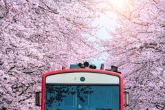 Άνθος ή Sakura κερασιών και trian την άνοιξη σε Jinhae, Νότια Κορέα Στοκ Φωτογραφίες