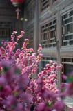 Άνθος δαμάσκηνων στο Πεκίνο Hutong στοκ φωτογραφίες με δικαίωμα ελεύθερης χρήσης