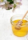 Άνθος και μέλι της Apple Στοκ Φωτογραφία