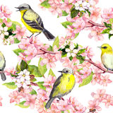 Άνθος κερασιών - μήλο, λουλούδια sakura, πουλιά floral πρότυπο άνευ ραφής watercolor Στοκ Φωτογραφία