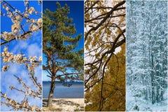 Άνθος κερασιών Ρήγα Λετονία Στοκ Φωτογραφίες