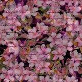 Άνθος κερασιών, ρόδινα λουλούδια, γραπτό χέρι κείμενο Μαύρη ανασκόπηση Μυστήριο άνευ ραφής σχέδιο Στοκ εικόνα με δικαίωμα ελεύθερης χρήσης