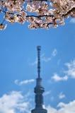 Άνθος κερασιών στο δέντρο του Τόκιο και ουρανού του Τόκιο Στοκ εικόνες με δικαίωμα ελεύθερης χρήσης