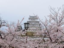 άνθος κερασιών του Himeji Castle Στοκ Εικόνες