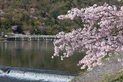 Άνθος κερασιών, Arashiyama την άνοιξη, Κιότο, Ιαπωνία Στοκ Εικόνες