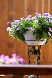 Άνθος λουλουδιών πετουνιών σε ένα δοχείο λουλουδιών στο μέρος Στοκ Εικόνες