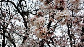 Άνθος λουλουδιών την άνοιξη Στοκ εικόνες με δικαίωμα ελεύθερης χρήσης