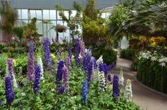 Άνθος λουλουδιών Foxglove Στοκ φωτογραφία με δικαίωμα ελεύθερης χρήσης