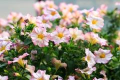 Άνθος στον κήπο φύσης Στοκ φωτογραφία με δικαίωμα ελεύθερης χρήσης