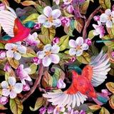 Άνθος της Apple και πετώντας πουλιά Στοκ Εικόνες