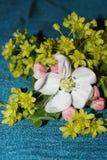 Άνθος της Apple και πράσινα λουλούδια Στοκ εικόνα με δικαίωμα ελεύθερης χρήσης