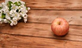 Άνθος της Apple και Apple Στοκ φωτογραφίες με δικαίωμα ελεύθερης χρήσης