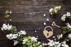 Άνθος της Apple με τη διακοσμητική κλειδαριά καρδιών και κλειδί στο ξύλινο backg Στοκ εικόνες με δικαίωμα ελεύθερης χρήσης