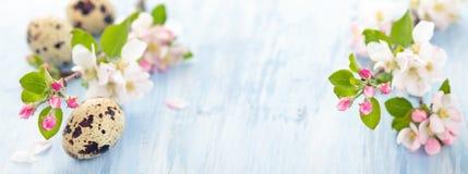 Άνθος της Apple στο μπλε Στοκ Εικόνα
