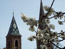 Άνθος της Apple στο νότιο Τύρολο Στοκ εικόνες με δικαίωμα ελεύθερης χρήσης