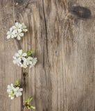 Άνθος της Apple στο ξύλινο υπόβαθρο Στοκ Εικόνες