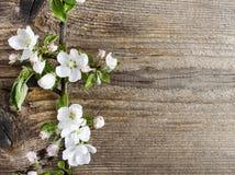 Άνθος της Apple στο ξύλινο υπόβαθρο Στοκ φωτογραφία με δικαίωμα ελεύθερης χρήσης