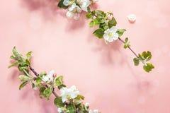 Άνθος της Apple στο ρόδινο υπόβαθρο διάστημα αντιγράφων Τοπ όψη Στοκ φωτογραφίες με δικαίωμα ελεύθερης χρήσης