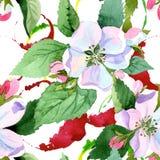 Άνθος της Apple wildflower Floral βοτανικό λουλούδι Άνευ ραφής πρότυπο ανασκόπησης Στοκ Φωτογραφία