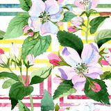 Άνθος της Apple wildflower Floral βοτανικό λουλούδι Άνευ ραφής πρότυπο ανασκόπησης Στοκ εικόνες με δικαίωμα ελεύθερης χρήσης