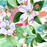 Άνθος της Apple wildflower Floral βοτανικό λουλούδι Άνευ ραφής πρότυπο ανασκόπησης Στοκ Εικόνες