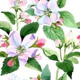 Άνθος της Apple wildflower Floral βοτανικό λουλούδι Άνευ ραφής πρότυπο ανασκόπησης Στοκ Εικόνα