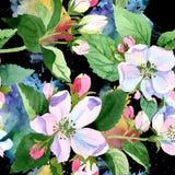 Άνθος της Apple wildflower Floral βοτανικό λουλούδι Άνευ ραφής πρότυπο ανασκόπησης Στοκ φωτογραφία με δικαίωμα ελεύθερης χρήσης