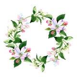 Άνθος της Apple wildflower Floral βοτανικό λουλούδι Τετράγωνο διακοσμήσεων συνόρων πλαισίων Στοκ φωτογραφίες με δικαίωμα ελεύθερης χρήσης