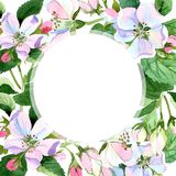 Άνθος της Apple wildflower Floral βοτανικό λουλούδι Τετράγωνο διακοσμήσεων συνόρων πλαισίων Στοκ Εικόνα