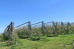 Άνθος των δέντρων μηλιάς στην άνοιξη Στοκ Εικόνα