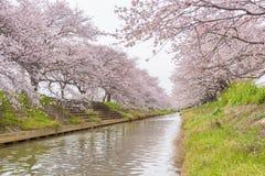 Άνθος Sakura κερασιών στη Σαϊτάμα, Ιαπωνία στοκ φωτογραφία