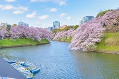 Άνθος Sakura κερασιών στο πάρκο Chidorigafuchi, Τόκιο, Ιαπωνία στοκ φωτογραφία