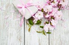 Άνθος Sakura με το κιβώτιο δώρων Στοκ Φωτογραφία
