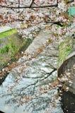 Άνθος Sakura Στοκ φωτογραφίες με δικαίωμα ελεύθερης χρήσης