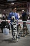 Άνθρωποι και σκυλιά στη διεθνή έκθεση σκυλιών του Μιλάνου, Ιταλία Στοκ εικόνα με δικαίωμα ελεύθερης χρήσης
