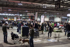 Άνθρωποι και σκυλιά στη διεθνή έκθεση σκυλιών του Μιλάνου, Ιταλία Στοκ Φωτογραφίες