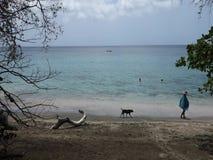 Άνθρωποι που απολαμβάνουν μια όμορφη παραλία στις Καραϊβικές Θάλασσες φιλμ μικρού μήκους