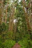 Άνθρωποι που περπατούν σε ένα δάσος στοκ φωτογραφία