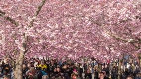 Άνθρωποι που περπατούν σε ένα flowery πάρκο, timelapse φιλμ μικρού μήκους